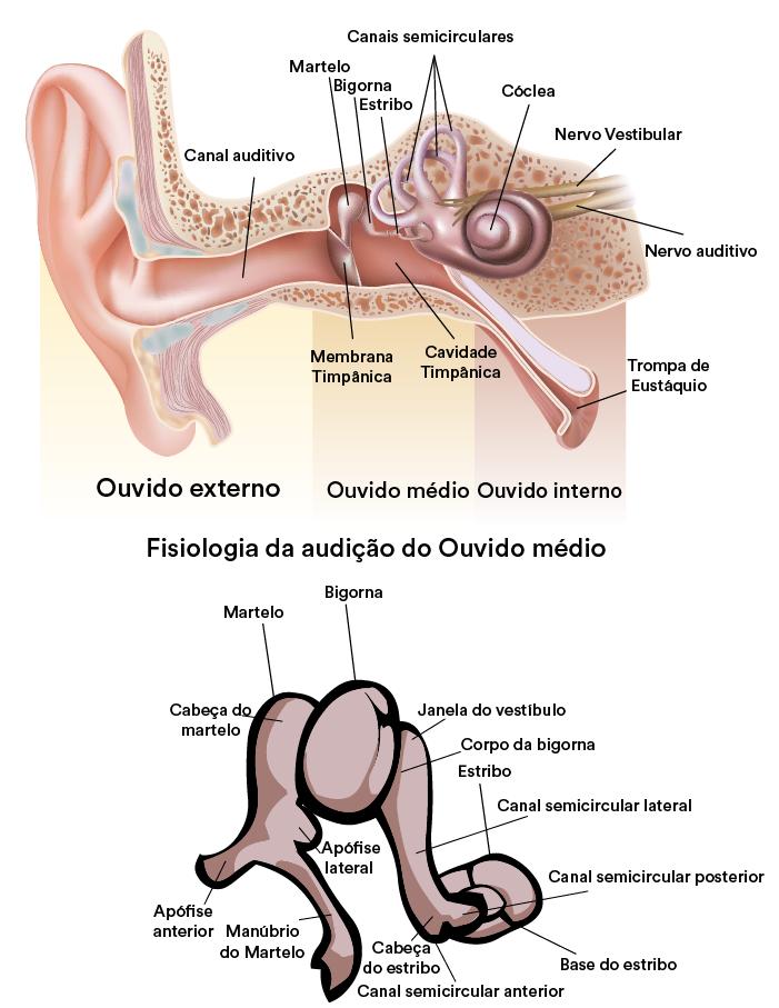 Fisiologia Ouvido Médio